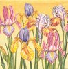 2 Paper Napkins Iris Field Yellow