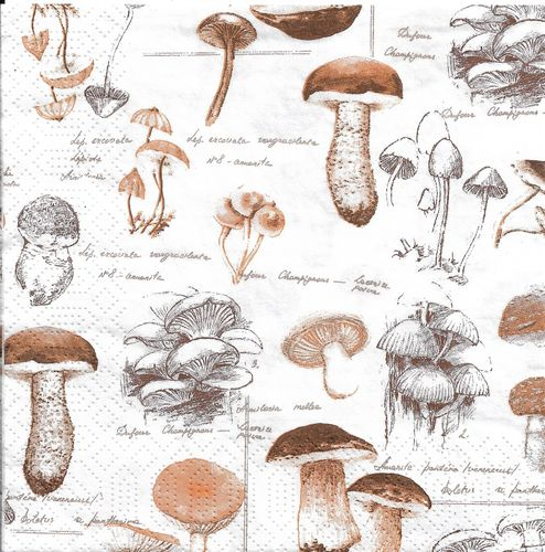 2 Paper Napkins Bio Mushrooms
